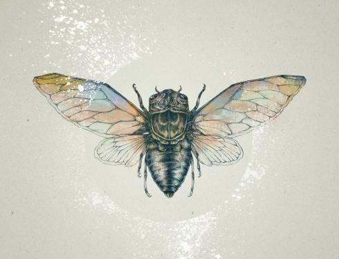 Cicada_FullRes